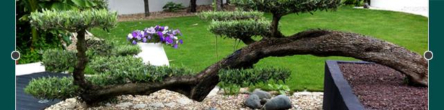 aménagements de jardins Tinchebray